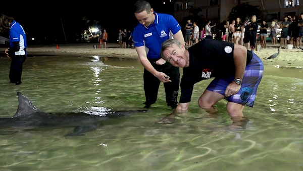 Andy Bichel feeds Wild Dolphins at Tangalooma