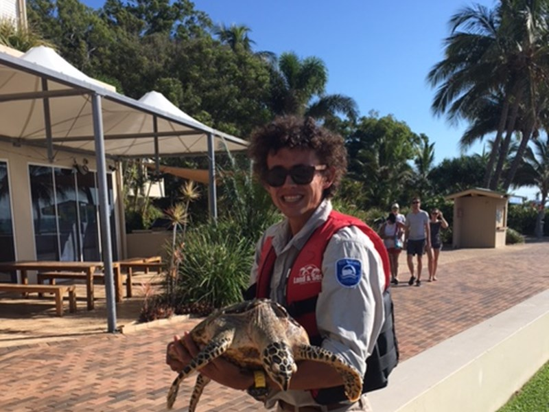Hawksbill Turtle rescue at Tangalooma