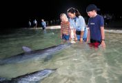 Kids love the experience of hand feeding a wild dolphin!